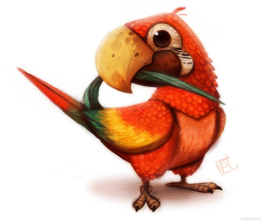 Цветы картинки, смешные рисунки про попугаев