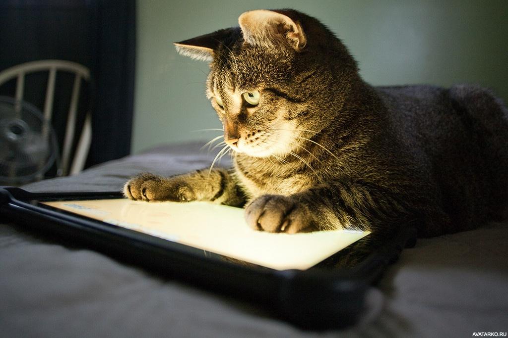 скачать игру про кота на компьютер через торрент бесплатно - фото 6