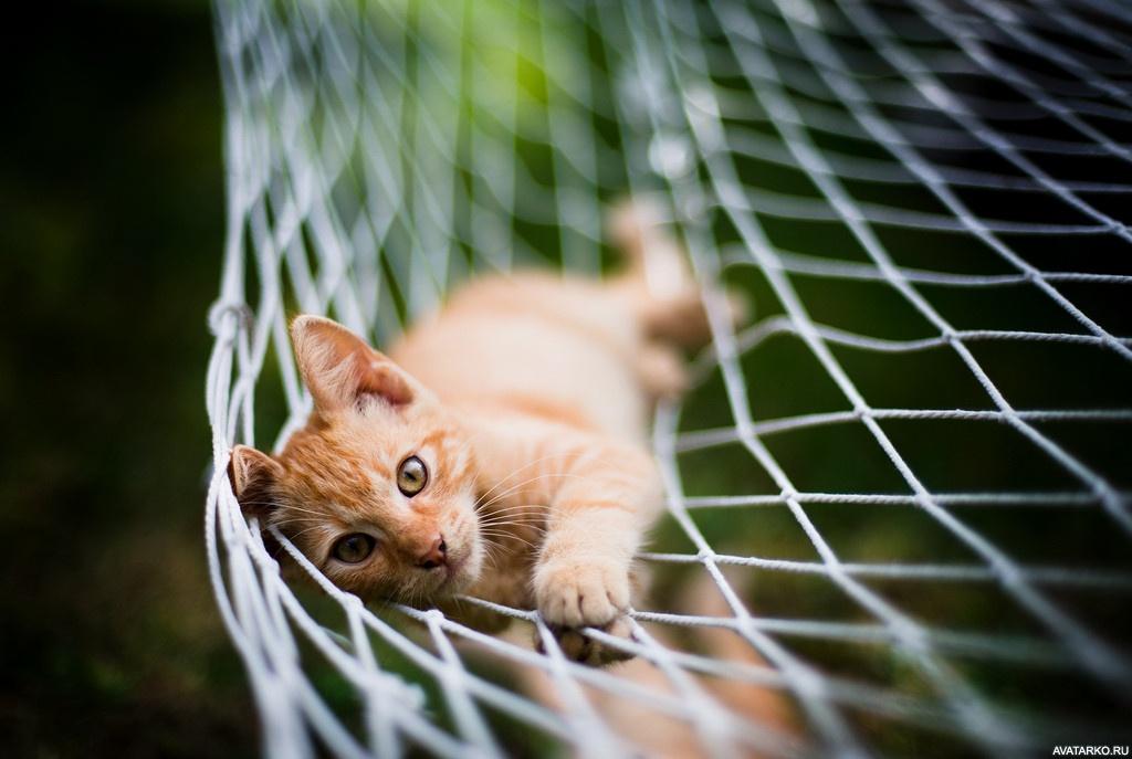 картинки коты в гамаке