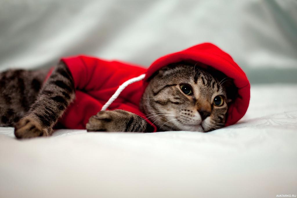 Смешная картинка кота перепутали с капюшоном была часто в вк