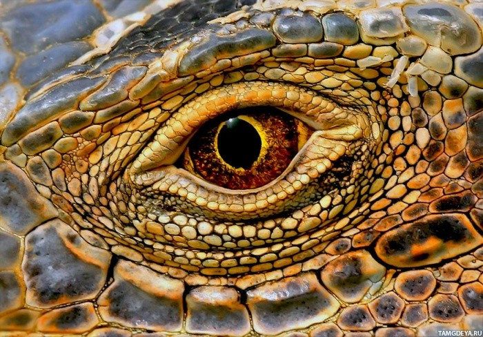 Картинки для декупажа змеи