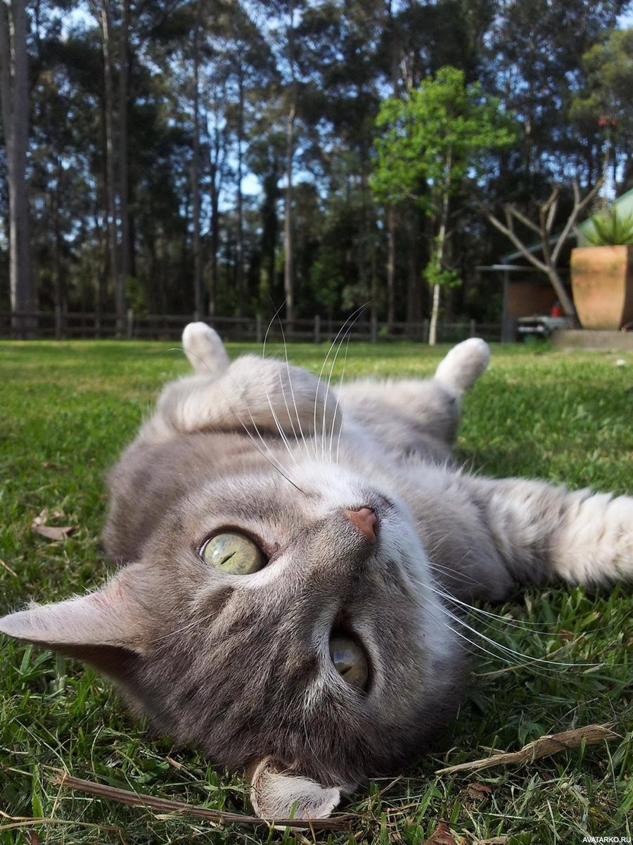 Картинки по работе смешные с котиками, картинка про