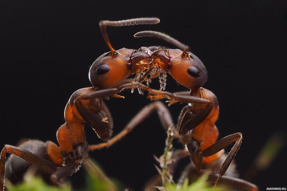 сами муравей фото или картинки вспомнит
