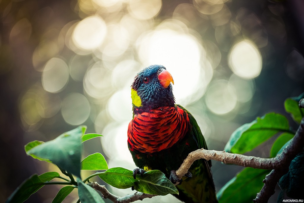 Широкоформатные картинки цветные попугайчики