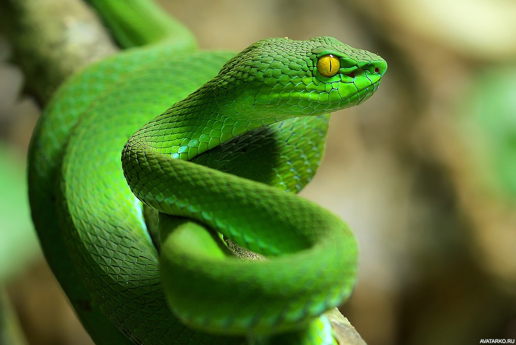 Картинки со змейками