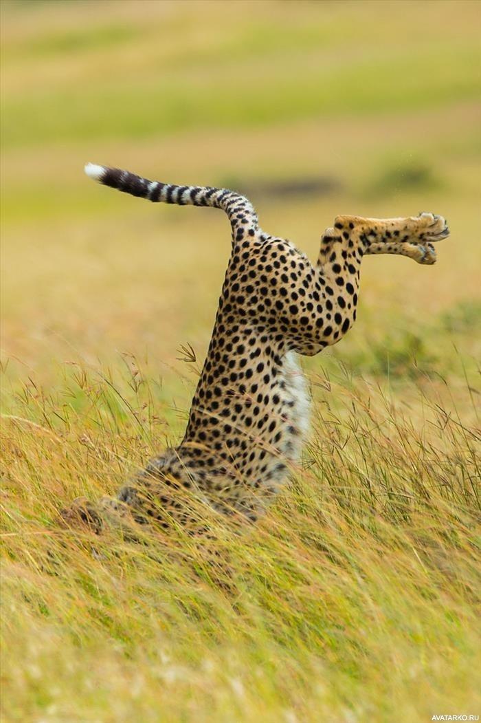 Прикольные и интересные картинки с животными, открытки