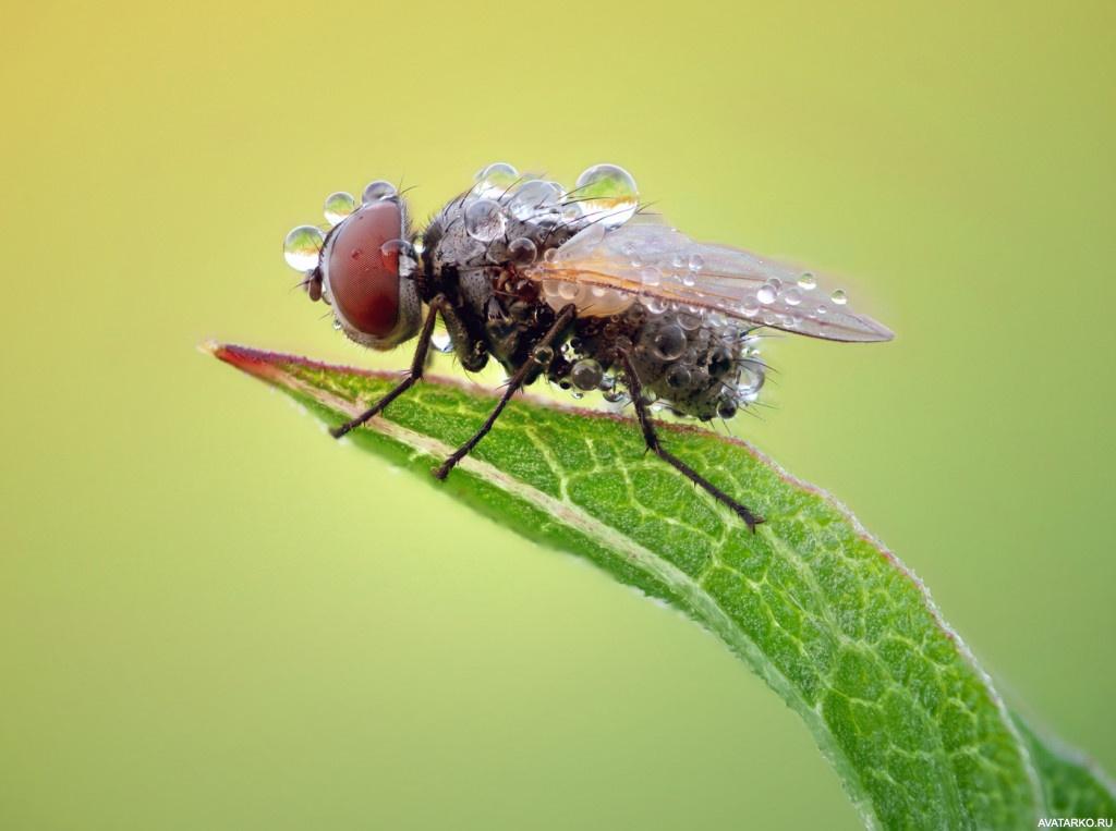 покажи картинки мухи образовалось