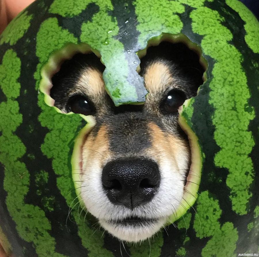 Шлем из арбуза картинки