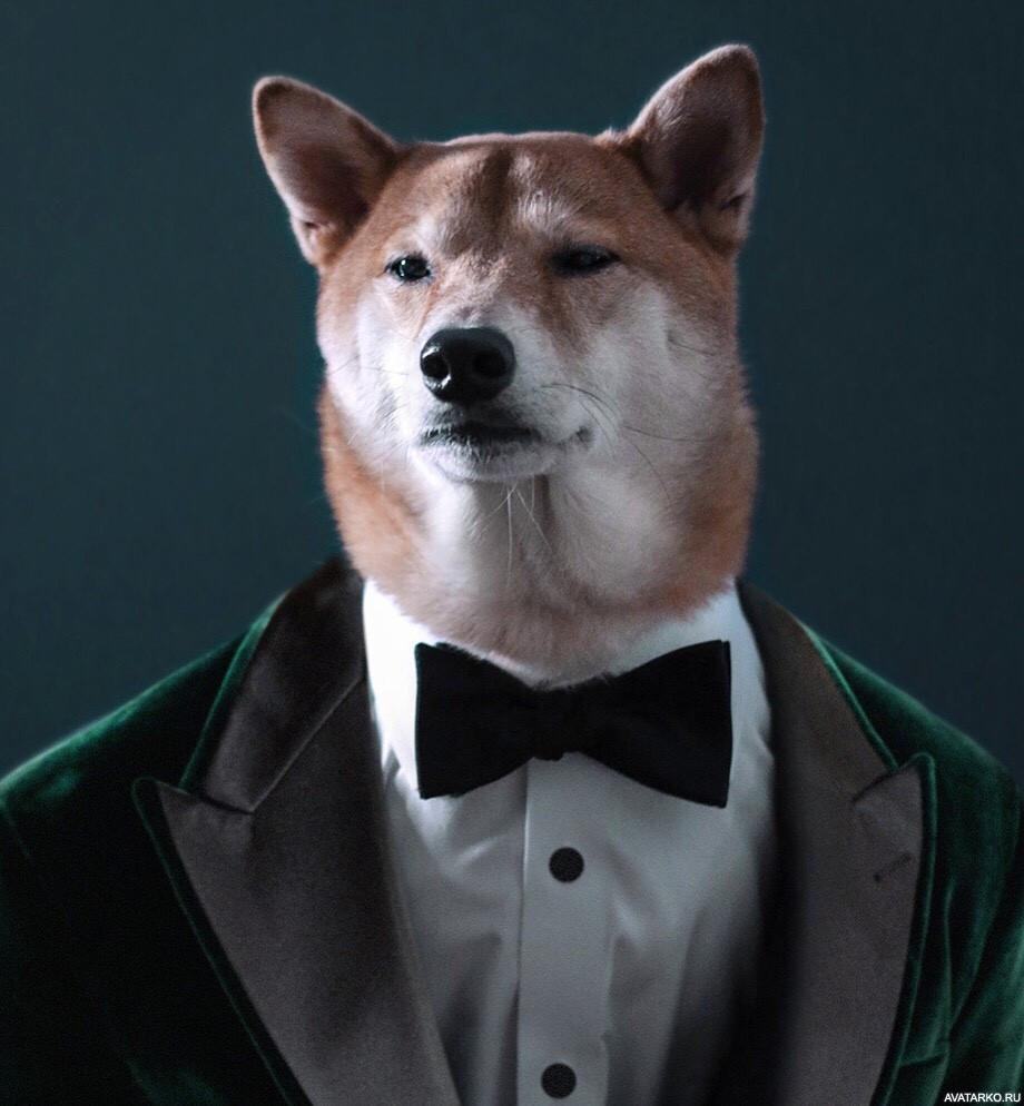 Аватары и картинки собаки