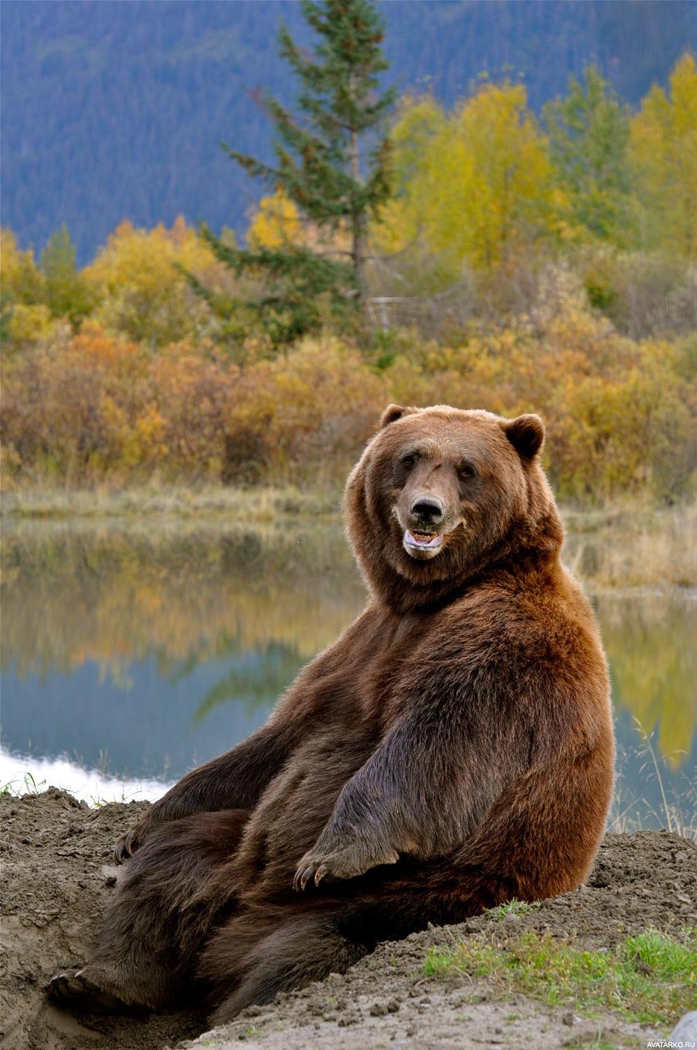это фото довольного медведя используйте термозащиту
