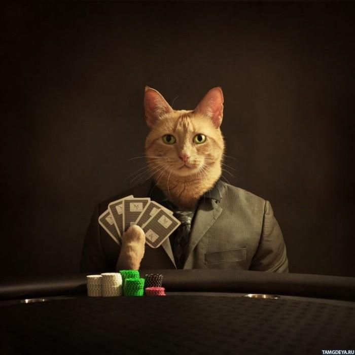 кота картами как играть в