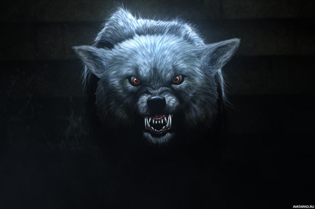Волк картинки на аватарку