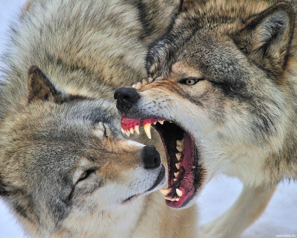 распространённые кресты картинки пасть злых волков подборку вкусных сытных