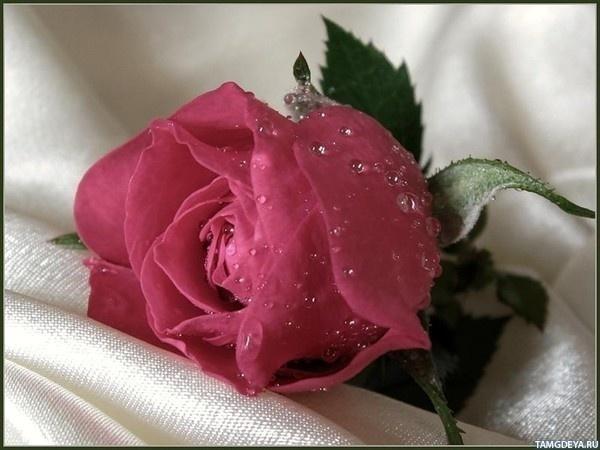 На аву картинка цветы