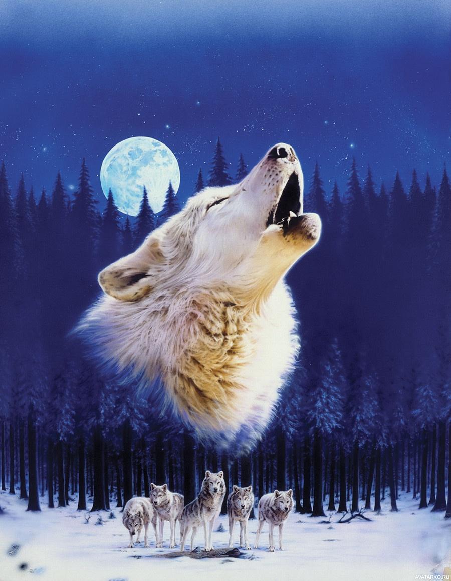 Волки и луна картинки