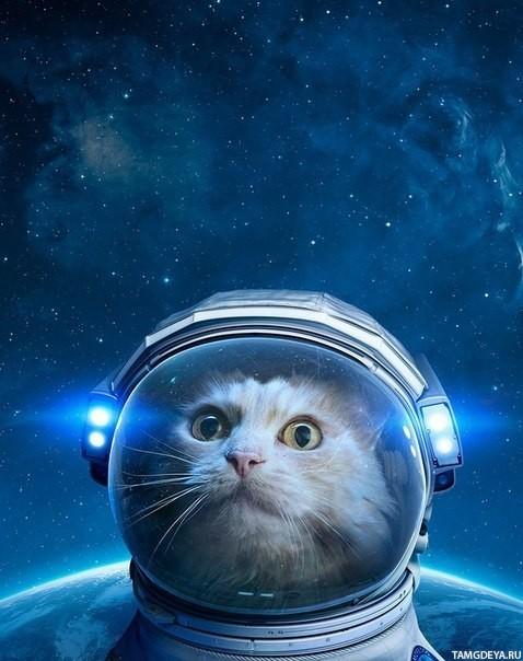 zhivotnye_kot_kosmonavt_kosmos_4182.jpg