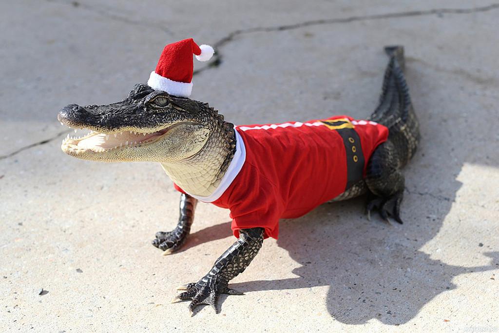Картинки новый год смешные с животными, маме днем