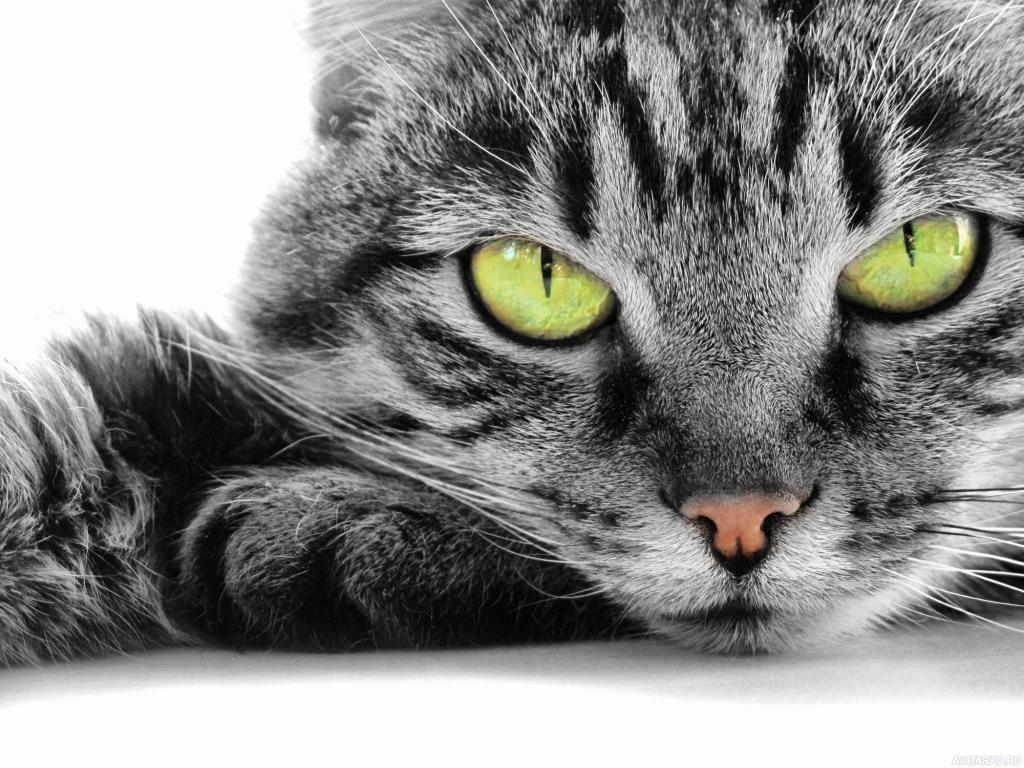 Картинки кошки на рабочий