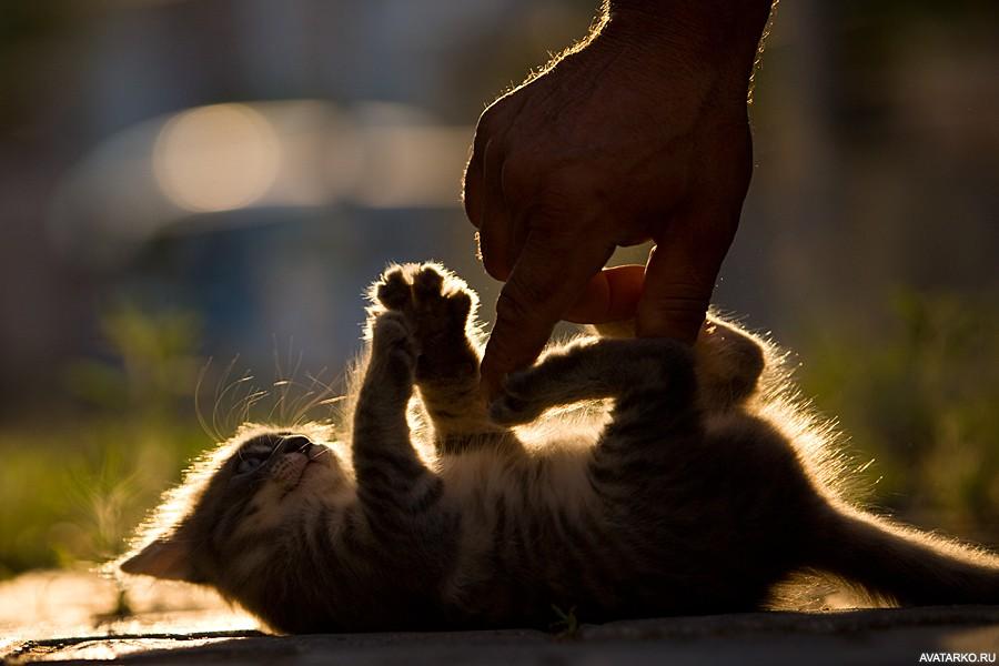 Картинки по запросу котенок играет с руками