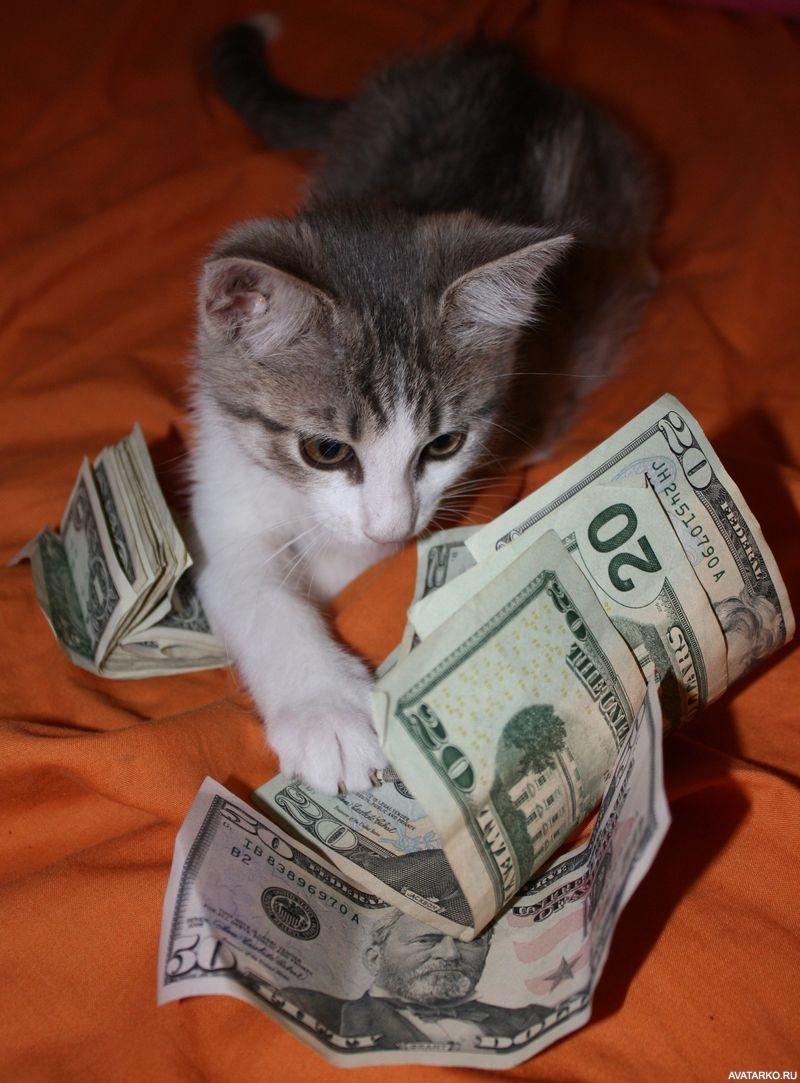 Деньги прикольные фото картинки, трейдер картинки февраля
