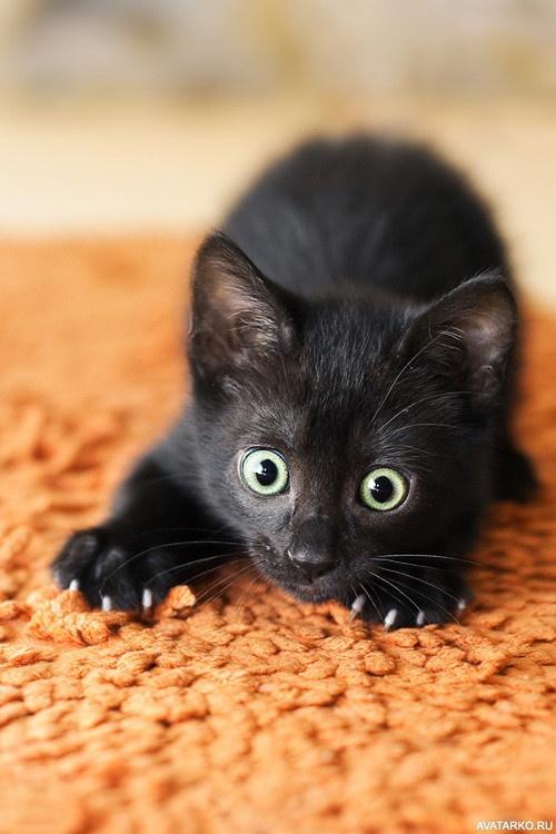 Смешные картинки черных котиков