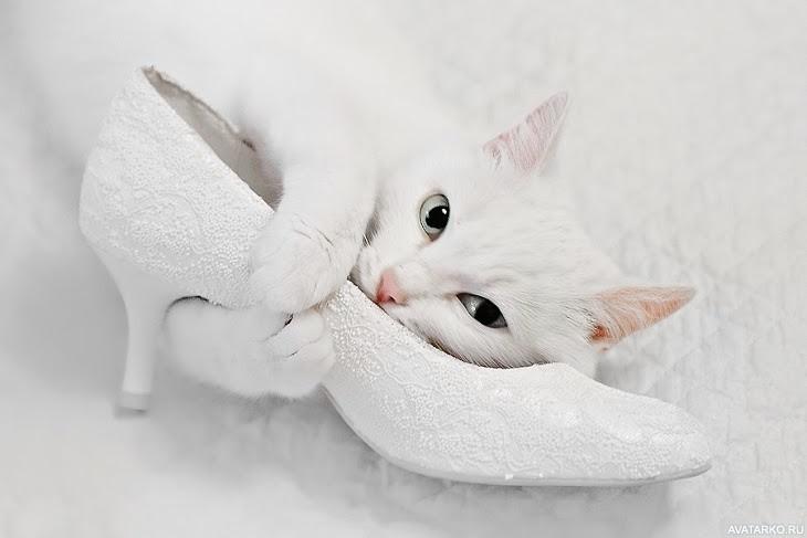 Открытки кошки белые, про похудение приколами