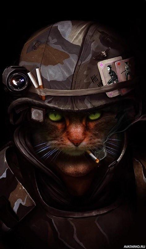 любую коты бойцы картинки согревают