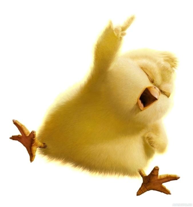 Цыпленок картинка с приколом, сам