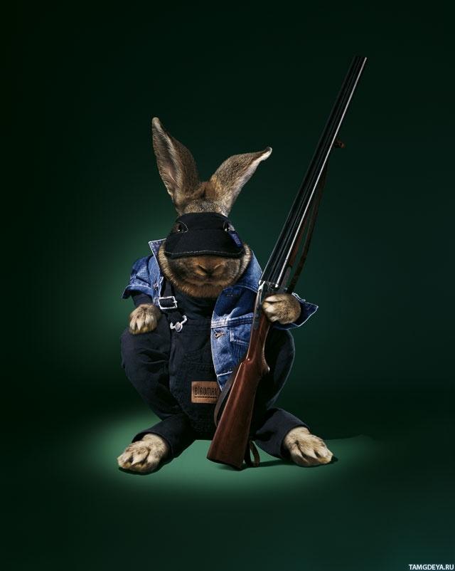 картинки с боевыми зайцами основные празднования дней
