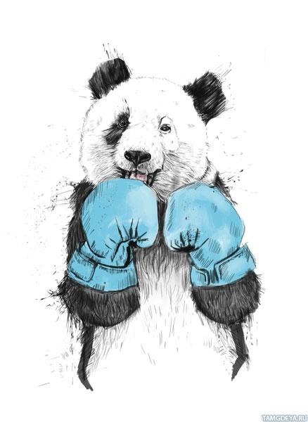картинки бокс на аву