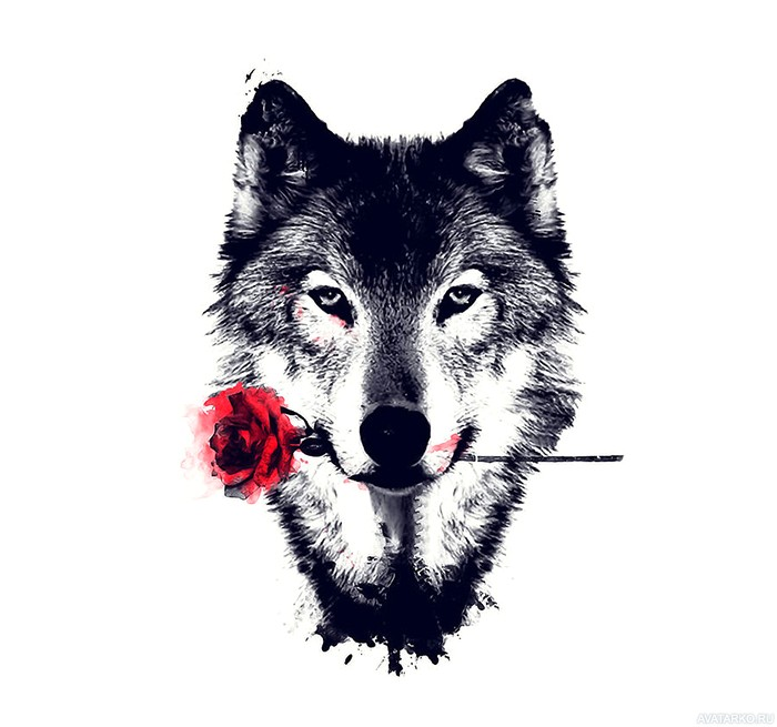 фото на аватарку волка