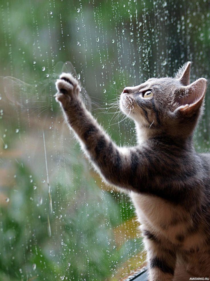лето дождь картинки прикольные для ватсапа лет