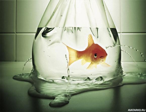 Мая ребенком, прикольная золотая рыбка в картинках